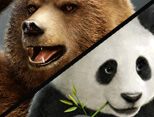 Kuma & Panda